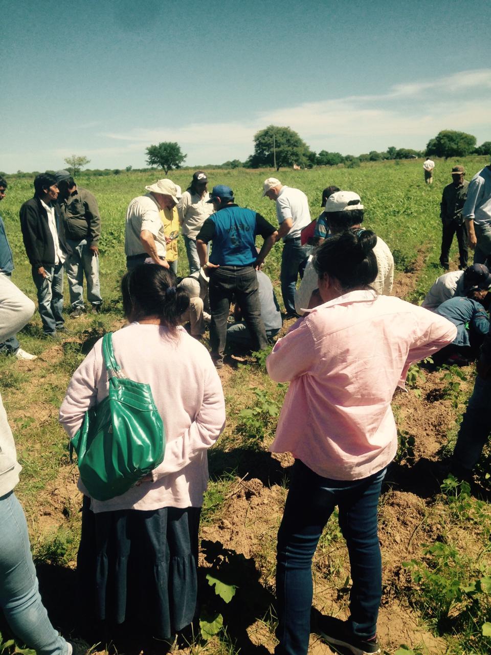 """Proyecto """"Producción de algodón bajo sistema agroecológico en comunidades Qom, Chaco"""", liderado por Alejandra Gómez"""