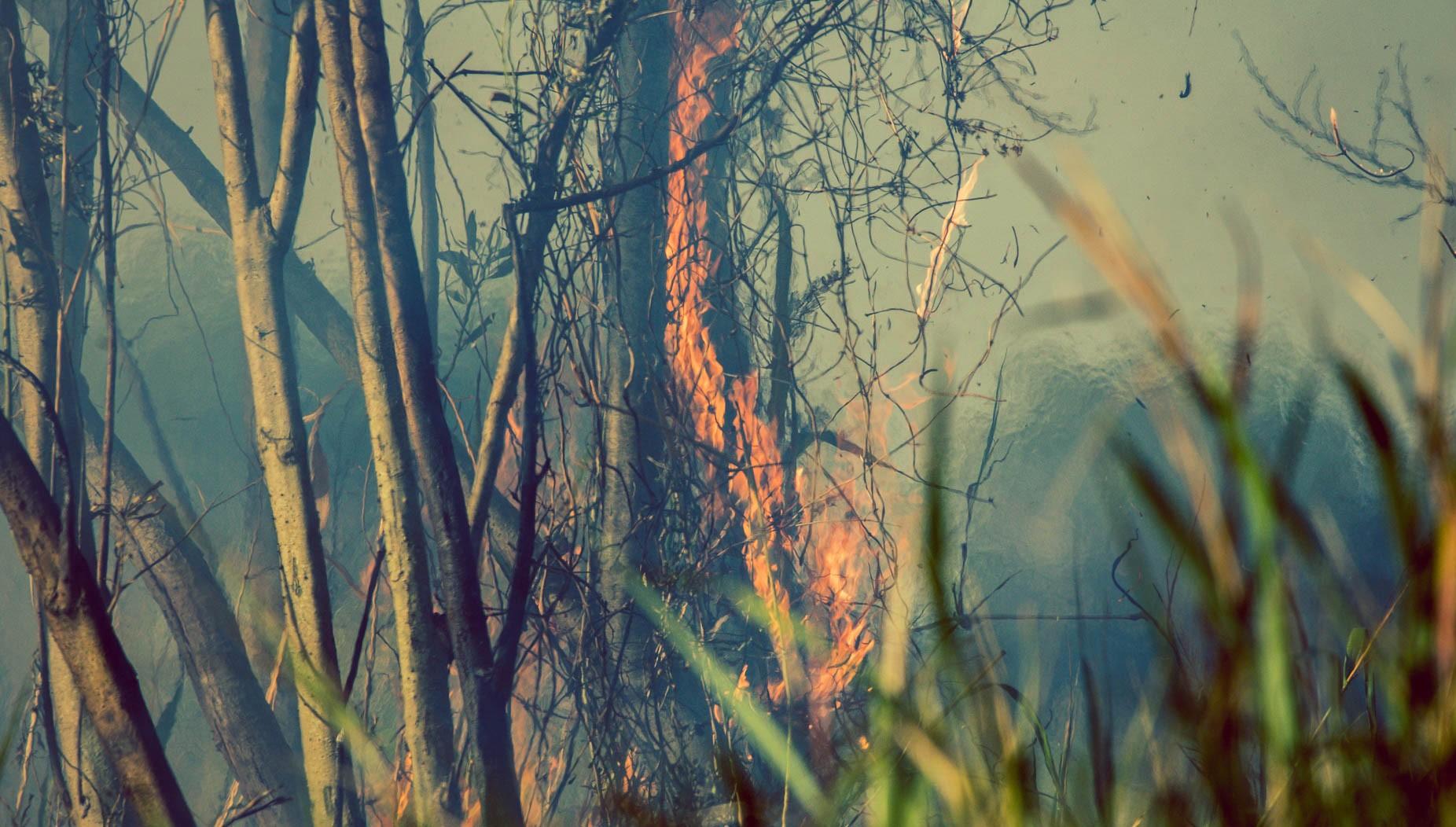 Incendios en el Delta del Paraná. Crédito: Eduardo Bodiño